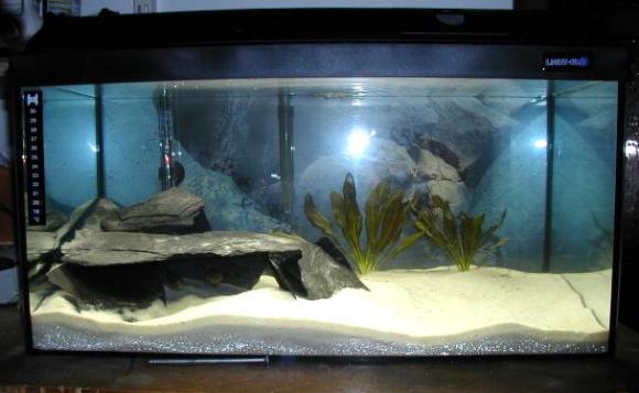 Mein aquarium for Aquarium einrichtung